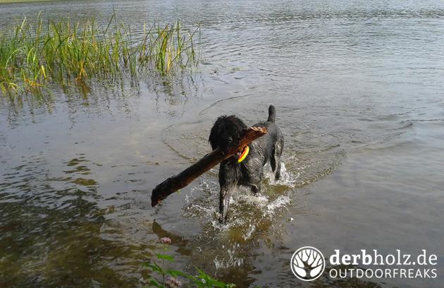 Derbholz bekloppte Nora am Zootzensee