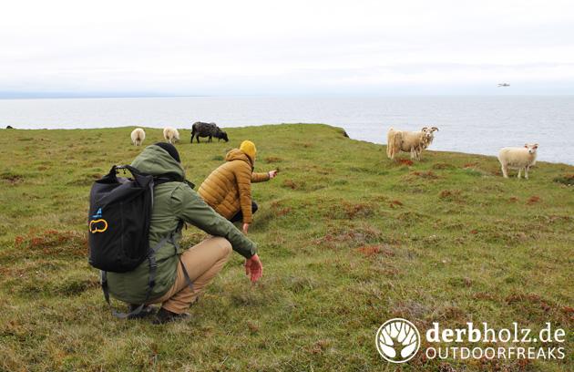 Derbholz Offroad Schafe