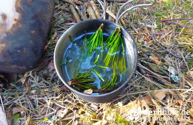 Sektor 92 Frühlingserwachen Kiefer Tee