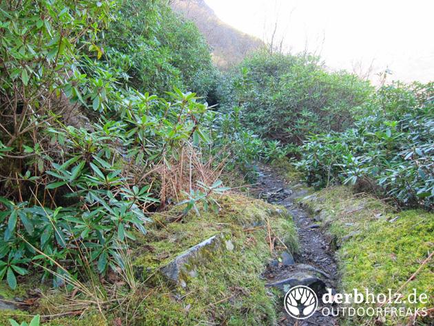 Knoydart Trail Küste mediterran mehr Gebüsch
