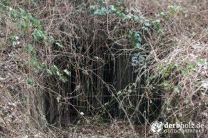 Derbholz MUNA Bunker Wolfsruh zugewucherter Eingang