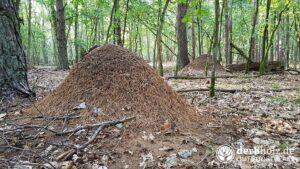 Derbholz Solo Camping Ameisenhaufen