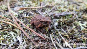 Derbholz Solo Camping Erdkröte