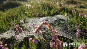 Derbholz Solo Camping Spinnenetz am Morgen
