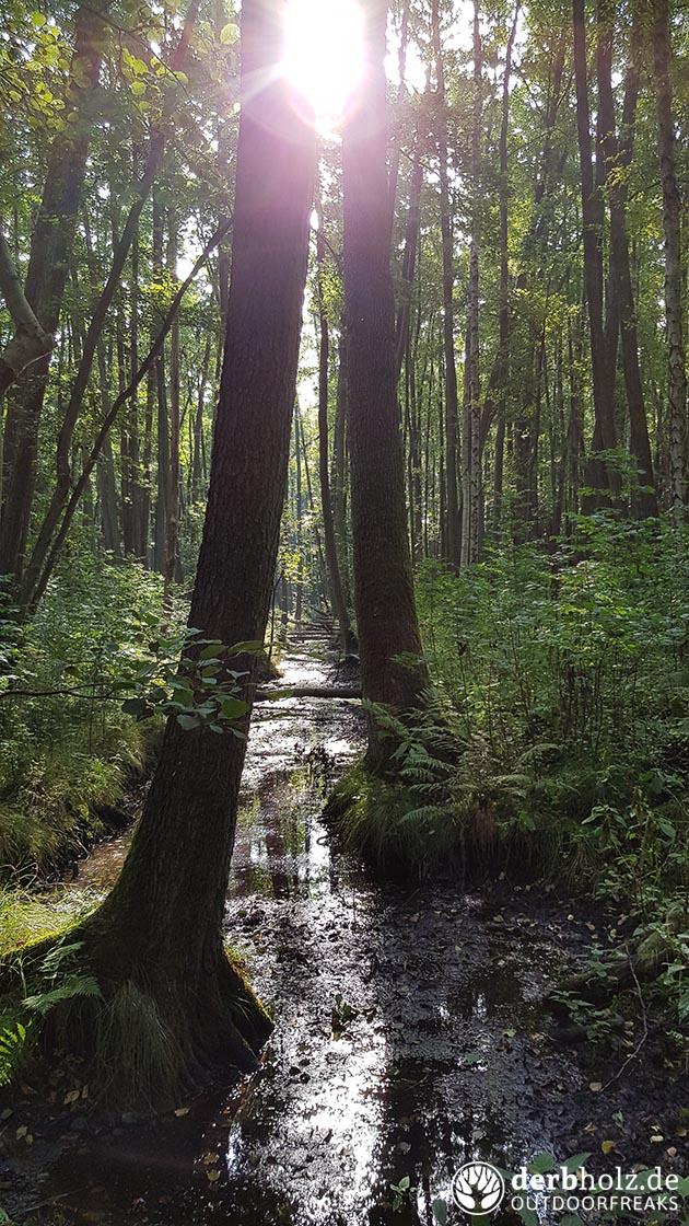 Versumpfter Zufluss im Wald
