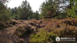 Derbholz Solo Camping Übergang zur Heide